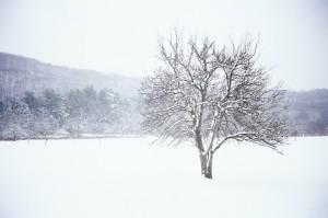 Winter1-300x199